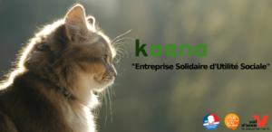 """Photo de chat. Koena """"Entreprise Solidaire d'Utilité Sociale""""."""